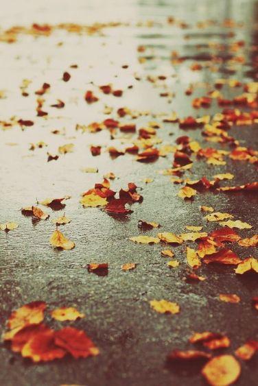 őszi fénykép